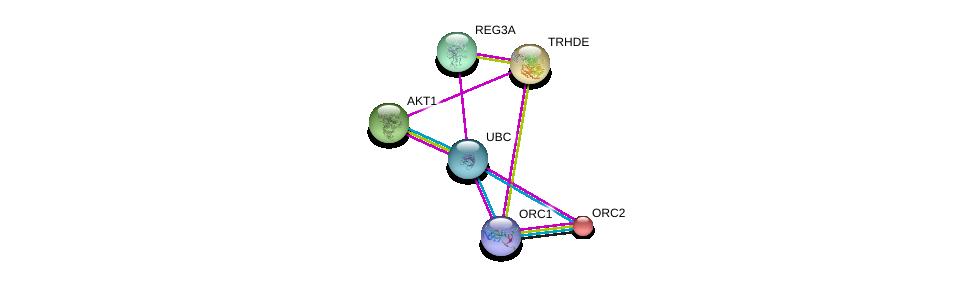 http://string-db.org/version_10/api/image/networkList?limit=0&targetmode=proteins&caller_identity=gene_cards&network_flavor=evidence&identifiers=9606.ENSP00000261180%0d%0a9606.ENSP00000304311%0d%0a9606.ENSP00000270202%0d%0a9606.ENSP00000234296%0d%0a9606.ENSP00000360621%0d%0a9606.ENSP00000344818%0d%0a