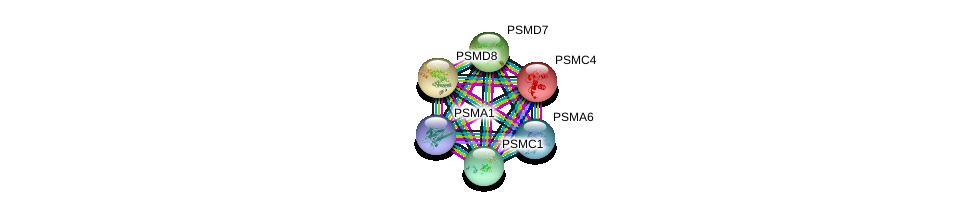 http://string-db.org/version_10/api/image/networkList?limit=0&targetmode=proteins&caller_identity=gene_cards&network_flavor=evidence&identifiers=9606.ENSP00000261303%0d%0a9606.ENSP00000414359%0d%0a9606.ENSP00000215071%0d%0a9606.ENSP00000261479%0d%0a9606.ENSP00000219313%0d%0a9606.ENSP00000157812%0d%0a