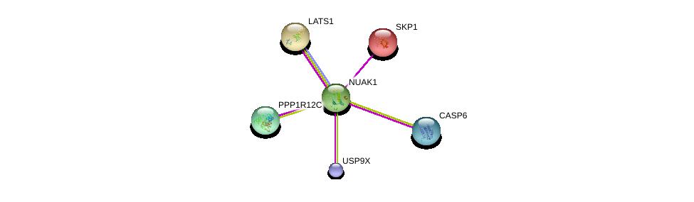 http://string-db.org/version_10/api/image/networkList?limit=0&targetmode=proteins&caller_identity=gene_cards&network_flavor=evidence&identifiers=9606.ENSP00000261402%0d%0a9606.ENSP00000316357%0d%0a9606.ENSP00000265164%0d%0a9606.ENSP00000253339%0d%0a9606.ENSP00000231487%0d%0a9606.ENSP00000263433%0d%0a