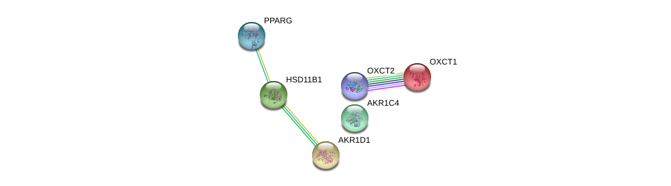 http://string-db.org/version_10/api/image/networkList?limit=0&targetmode=proteins&caller_identity=gene_cards&network_flavor=evidence&identifiers=9606.ENSP00000261465%0d%0a9606.ENSP00000242375%0d%0a9606.ENSP00000263126%0d%0a9606.ENSP00000287820%0d%0a9606.ENSP00000361914%0d%0a9606.ENSP00000196371%0d%0a