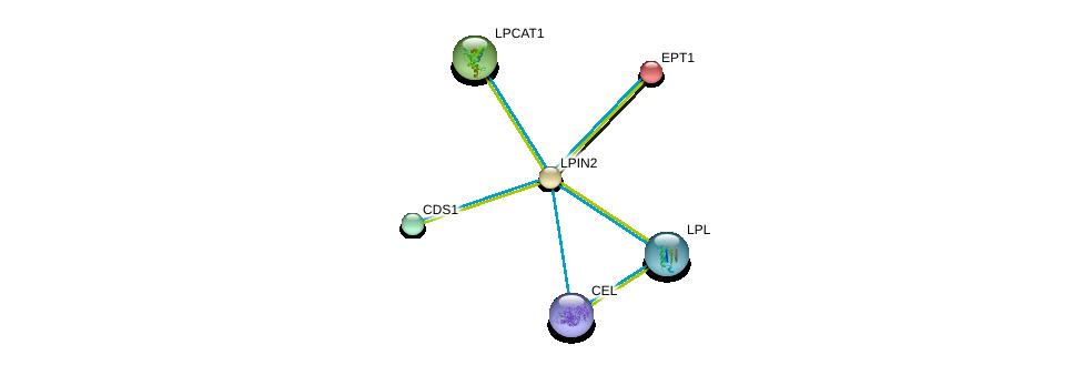 http://string-db.org/version_10/api/image/networkList?limit=0&targetmode=proteins&caller_identity=gene_cards&network_flavor=evidence&identifiers=9606.ENSP00000261596%0d%0a9606.ENSP00000361151%0d%0a9606.ENSP00000295887%0d%0a9606.ENSP00000283415%0d%0a9606.ENSP00000309757%0d%0a9606.ENSP00000260585%0d%0a