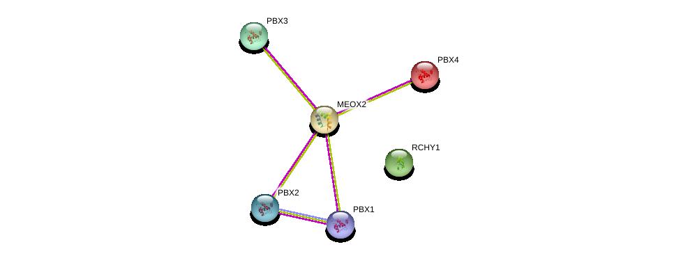 http://string-db.org/version_10/api/image/networkList?limit=0&targetmode=proteins&caller_identity=gene_cards&network_flavor=evidence&identifiers=9606.ENSP00000262041%0d%0a9606.ENSP00000251203%0d%0a9606.ENSP00000362588%0d%0a9606.ENSP00000405890%0d%0a9606.ENSP00000364190%0d%0a9606.ENSP00000321239%0d%0a