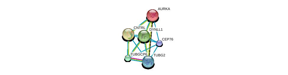 http://string-db.org/version_10/api/image/networkList?limit=0&targetmode=proteins&caller_identity=gene_cards&network_flavor=evidence&identifiers=9606.ENSP00000262127%0d%0a9606.ENSP00000216911%0d%0a9606.ENSP00000238341%0d%0a9606.ENSP00000242577%0d%0a9606.ENSP00000248846%0d%0a9606.ENSP00000251412%0d%0a