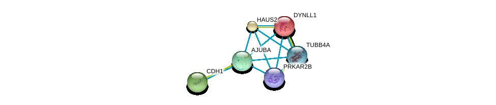 http://string-db.org/version_10/api/image/networkList?limit=0&targetmode=proteins&caller_identity=gene_cards&network_flavor=evidence&identifiers=9606.ENSP00000262713%0d%0a9606.ENSP00000264071%0d%0a9606.ENSP00000261769%0d%0a9606.ENSP00000260372%0d%0a9606.ENSP00000265717%0d%0a9606.ENSP00000242577%0d%0a