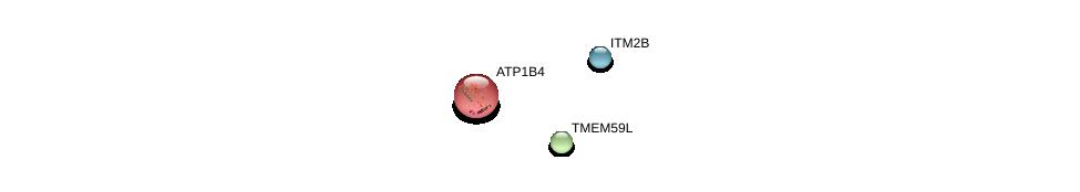 http://string-db.org/version_10/api/image/networkList?limit=0&targetmode=proteins&caller_identity=gene_cards&network_flavor=evidence&identifiers=9606.ENSP00000262817%0d%0a9606.ENSP00000367828%0d%0a9606.ENSP00000218008%0d%0a