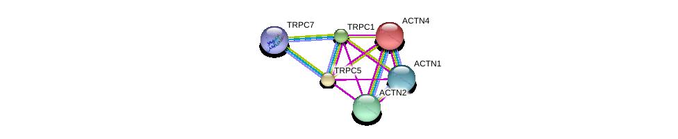 http://string-db.org/version_10/api/image/networkList?limit=0&targetmode=proteins&caller_identity=gene_cards&network_flavor=evidence&identifiers=9606.ENSP00000262839%0d%0a9606.ENSP00000273482%0d%0a9606.ENSP00000426070%0d%0a9606.ENSP00000252699%0d%0a9606.ENSP00000377941%0d%0a9606.ENSP00000355537%0d%0a