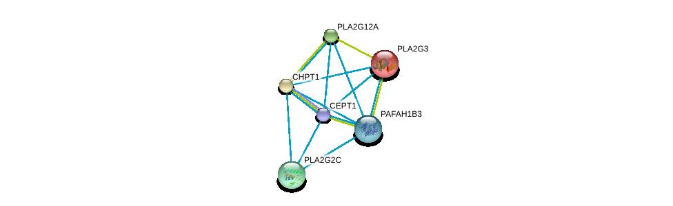 http://string-db.org/version_10/api/image/networkList?limit=0&targetmode=proteins&caller_identity=gene_cards&network_flavor=evidence&identifiers=9606.ENSP00000262890%0d%0a9606.ENSP00000349696%0d%0a9606.ENSP00000215885%0d%0a9606.ENSP00000229266%0d%0a9606.ENSP00000243501%0d%0a9606.ENSP00000247992%0d%0a