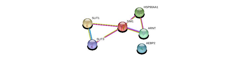 http://string-db.org/version_10/api/image/networkList?limit=0&targetmode=proteins&caller_identity=gene_cards&network_flavor=evidence&identifiers=9606.ENSP00000262901%0d%0a9606.ENSP00000351407%0d%0a9606.ENSP00000335153%0d%0a9606.ENSP00000381840%0d%0a9606.ENSP00000430333%0d%0a9606.ENSP00000266058%0d%0a