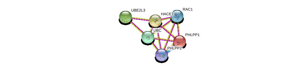 http://string-db.org/version_10/api/image/networkList?limit=0&targetmode=proteins&caller_identity=gene_cards&network_flavor=evidence&identifiers=9606.ENSP00000262903%0d%0a9606.ENSP00000348461%0d%0a9606.ENSP00000344259%0d%0a9606.ENSP00000344818%0d%0a9606.ENSP00000348611%0d%0a9606.ENSP00000262719%0d%0a