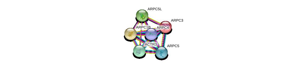 http://string-db.org/version_10/api/image/networkList?limit=0&targetmode=proteins&caller_identity=gene_cards&network_flavor=evidence&identifiers=9606.ENSP00000263238%0d%0a9606.ENSP00000259477%0d%0a9606.ENSP00000388169%0d%0a9606.ENSP00000228825%0d%0a9606.ENSP00000252725%0d%0a9606.ENSP00000352918%0d%0a