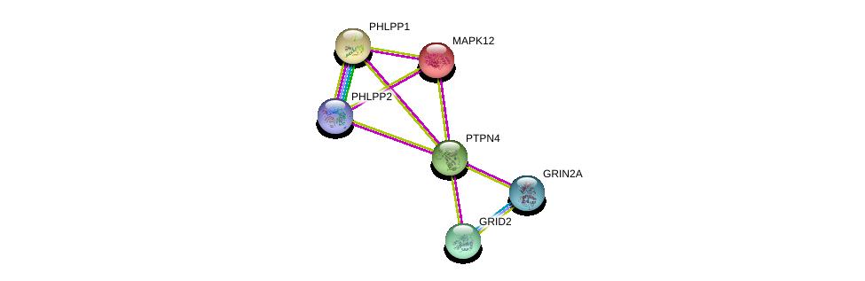 http://string-db.org/version_10/api/image/networkList?limit=0&targetmode=proteins&caller_identity=gene_cards&network_flavor=evidence&identifiers=9606.ENSP00000263708%0d%0a9606.ENSP00000215659%0d%0a9606.ENSP00000282020%0d%0a9606.ENSP00000332549%0d%0a9606.ENSP00000348611%0d%0a9606.ENSP00000262719%0d%0a