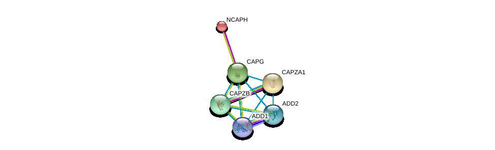 http://string-db.org/version_10/api/image/networkList?limit=0&targetmode=proteins&caller_identity=gene_cards&network_flavor=evidence&identifiers=9606.ENSP00000263867%0d%0a9606.ENSP00000240423%0d%0a9606.ENSP00000263168%0d%0a9606.ENSP00000264202%0d%0a9606.ENSP00000264436%0d%0a9606.ENSP00000264758%0d%0a