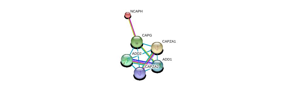 http://string-db.org/version_10/api/image/networkList?limit=0&targetmode=proteins&caller_identity=gene_cards&network_flavor=evidence&identifiers=9606.ENSP00000263867%0d%0a9606.ENSP00000240423%0d%0a9606.ENSP00000264436%0d%0a9606.ENSP00000264758%0d%0a9606.ENSP00000354947%0d%0a9606.ENSP00000263168%0d%0a