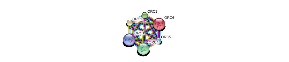 http://string-db.org/version_10/api/image/networkList?limit=0&targetmode=proteins&caller_identity=gene_cards&network_flavor=evidence&identifiers=9606.ENSP00000264169%0d%0a9606.ENSP00000219097%0d%0a9606.ENSP00000234296%0d%0a9606.ENSP00000257789%0d%0a9606.ENSP00000297431%0d%0a9606.ENSP00000360621%0d%0a