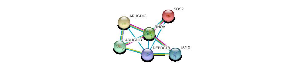 http://string-db.org/version_10/api/image/networkList?limit=0&targetmode=proteins&caller_identity=gene_cards&network_flavor=evidence&identifiers=9606.ENSP00000265036%0d%0a9606.ENSP00000216373%0d%0a9606.ENSP00000219409%0d%0a9606.ENSP00000220507%0d%0a9606.ENSP00000228945%0d%0a9606.ENSP00000232458%0d%0a