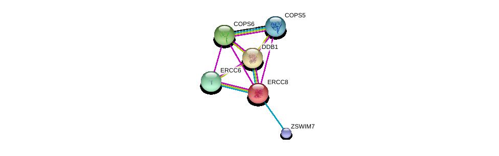 http://string-db.org/version_10/api/image/networkList?limit=0&targetmode=proteins&caller_identity=gene_cards&network_flavor=evidence&identifiers=9606.ENSP00000265038%0d%0a9606.ENSP00000301764%0d%0a9606.ENSP00000348089%0d%0a9606.ENSP00000304102%0d%0a9606.ENSP00000350512%0d%0a9606.ENSP00000382218%0d%0a