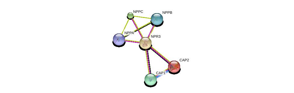 http://string-db.org/version_10/api/image/networkList?limit=0&targetmode=proteins&caller_identity=gene_cards&network_flavor=evidence&identifiers=9606.ENSP00000265074%0d%0a9606.ENSP00000365651%0d%0a9606.ENSP00000229922%0d%0a9606.ENSP00000361878%0d%0a9606.ENSP00000365663%0d%0a9606.ENSP00000295440%0d%0a