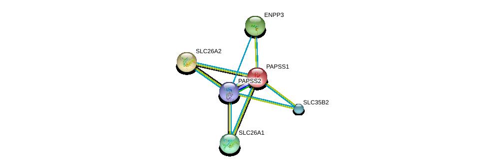 http://string-db.org/version_10/api/image/networkList?limit=0&targetmode=proteins&caller_identity=gene_cards&network_flavor=evidence&identifiers=9606.ENSP00000265174%0d%0a9606.ENSP00000286298%0d%0a9606.ENSP00000354721%0d%0a9606.ENSP00000406157%0d%0a9606.ENSP00000377401%0d%0a9606.ENSP00000350265%0d%0a