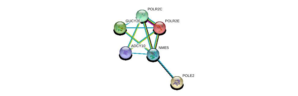 http://string-db.org/version_10/api/image/networkList?limit=0&targetmode=proteins&caller_identity=gene_cards&network_flavor=evidence&identifiers=9606.ENSP00000265191%0d%0a9606.ENSP00000356825%0d%0a9606.ENSP00000215587%0d%0a9606.ENSP00000216367%0d%0a9606.ENSP00000218006%0d%0a9606.ENSP00000219252%0d%0a