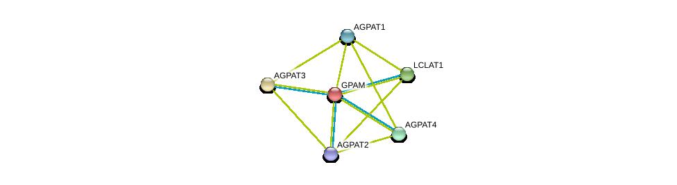 http://string-db.org/version_10/api/image/networkList?limit=0&targetmode=proteins&caller_identity=gene_cards&network_flavor=evidence&identifiers=9606.ENSP00000265276%0d%0a9606.ENSP00000337463%0d%0a9606.ENSP00000360761%0d%0a9606.ENSP00000291572%0d%0a9606.ENSP00000314036%0d%0a9606.ENSP00000310551%0d%0a