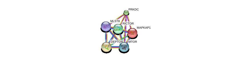 http://string-db.org/version_10/api/image/networkList?limit=0&targetmode=proteins&caller_identity=gene_cards&network_flavor=evidence&identifiers=9606.ENSP00000265960%0d%0a9606.ENSP00000286234%0d%0a9606.ENSP00000349959%0d%0a9606.ENSP00000380313%0d%0a9606.ENSP00000313420%0d%0a9606.ENSP00000354558%0d%0a