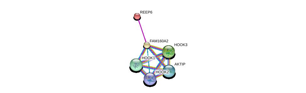 http://string-db.org/version_10/api/image/networkList?limit=0&targetmode=proteins&caller_identity=gene_cards&network_flavor=evidence&identifiers=9606.ENSP00000265978%0d%0a9606.ENSP00000380785%0d%0a9606.ENSP00000233596%0d%0a9606.ENSP00000305699%0d%0a9606.ENSP00000360252%0d%0a9606.ENSP00000378152%0d%0a