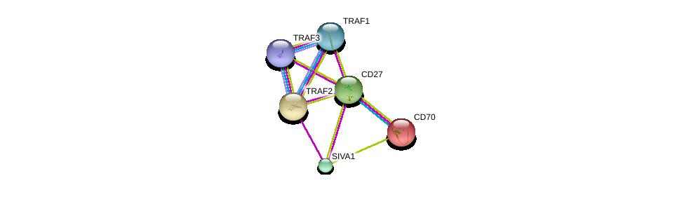 http://string-db.org/version_10/api/image/networkList?limit=0&targetmode=proteins&caller_identity=gene_cards&network_flavor=evidence&identifiers=9606.ENSP00000266557%0d%0a9606.ENSP00000247668%0d%0a9606.ENSP00000376500%0d%0a9606.ENSP00000329213%0d%0a9606.ENSP00000245903%0d%0a9606.ENSP00000362994%0d%0a