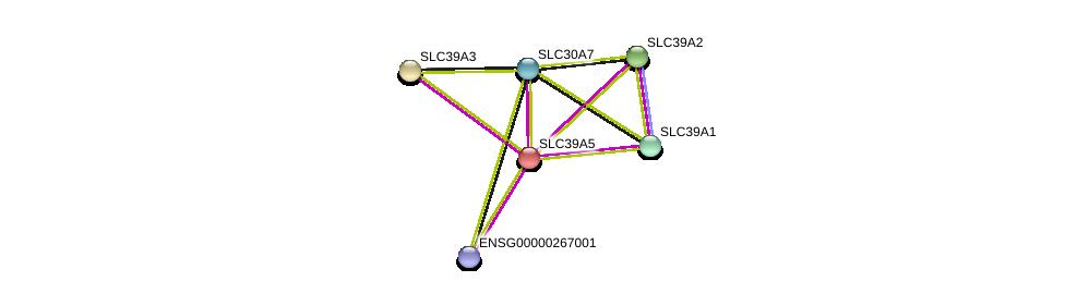 http://string-db.org/version_10/api/image/networkList?limit=0&targetmode=proteins&caller_identity=gene_cards&network_flavor=evidence&identifiers=9606.ENSP00000266980%0d%0a9606.ENSP00000298681%0d%0a9606.ENSP00000467958%0d%0a9606.ENSP00000309710%0d%0a9606.ENSP00000269740%0d%0a9606.ENSP00000350278%0d%0a