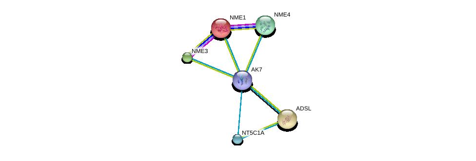 http://string-db.org/version_10/api/image/networkList?limit=0&targetmode=proteins&caller_identity=gene_cards&network_flavor=evidence&identifiers=9606.ENSP00000267584%0d%0a9606.ENSP00000013034%0d%0a9606.ENSP00000216194%0d%0a9606.ENSP00000219302%0d%0a9606.ENSP00000219479%0d%0a9606.ENSP00000235628%0d%0a