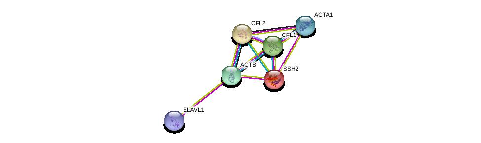 http://string-db.org/version_10/api/image/networkList?limit=0&targetmode=proteins&caller_identity=gene_cards&network_flavor=evidence&identifiers=9606.ENSP00000269033%0d%0a9606.ENSP00000298159%0d%0a9606.ENSP00000355645%0d%0a9606.ENSP00000349960%0d%0a9606.ENSP00000309629%0d%0a9606.ENSP00000385269%0d%0a