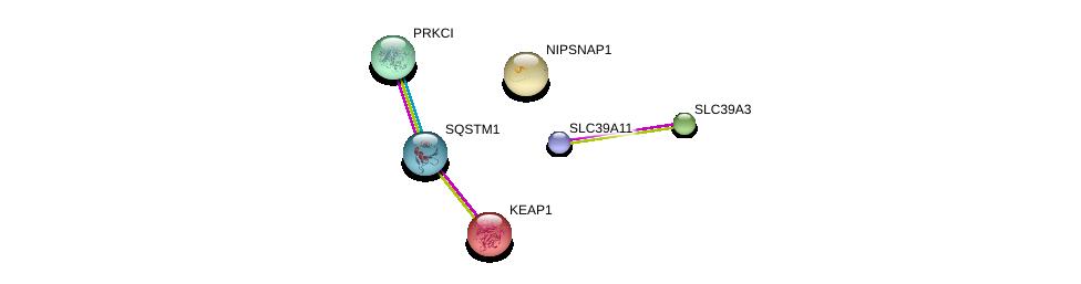 http://string-db.org/version_10/api/image/networkList?limit=0&targetmode=proteins&caller_identity=gene_cards&network_flavor=evidence&identifiers=9606.ENSP00000269740%0d%0a9606.ENSP00000295797%0d%0a9606.ENSP00000216121%0d%0a9606.ENSP00000374455%0d%0a9606.ENSP00000171111%0d%0a9606.ENSP00000445829%0d%0a