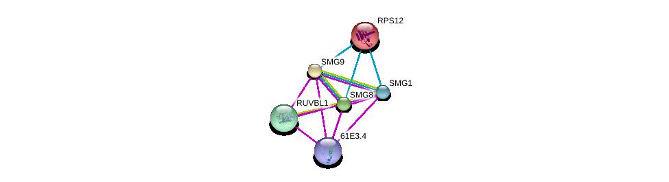 http://string-db.org/version_10/api/image/networkList?limit=0&targetmode=proteins&caller_identity=gene_cards&network_flavor=evidence&identifiers=9606.ENSP00000270066%0d%0a9606.ENSP00000402515%0d%0a9606.ENSP00000429734%0d%0a9606.ENSP00000300917%0d%0a9606.ENSP00000318297%0d%0a9606.ENSP00000230050%0d%0a