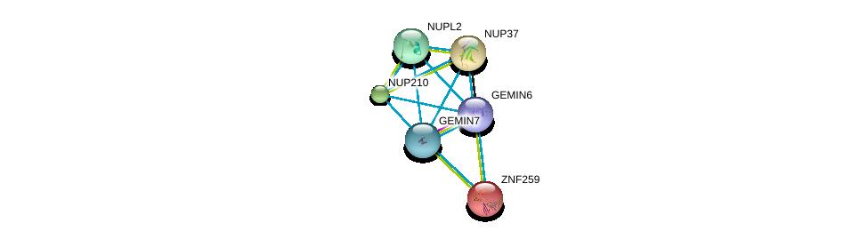 http://string-db.org/version_10/api/image/networkList?limit=0&targetmode=proteins&caller_identity=gene_cards&network_flavor=evidence&identifiers=9606.ENSP00000270257%0d%0a9606.ENSP00000281950%0d%0a9606.ENSP00000227322%0d%0a9606.ENSP00000251074%0d%0a9606.ENSP00000254508%0d%0a9606.ENSP00000258742%0d%0a