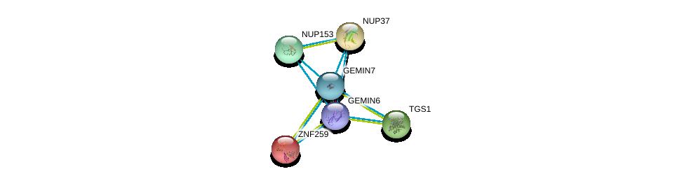 http://string-db.org/version_10/api/image/networkList?limit=0&targetmode=proteins&caller_identity=gene_cards&network_flavor=evidence&identifiers=9606.ENSP00000270257%0d%0a9606.ENSP00000281950%0d%0a9606.ENSP00000262077%0d%0a9606.ENSP00000227322%0d%0a9606.ENSP00000251074%0d%0a9606.ENSP00000260129%0d%0a