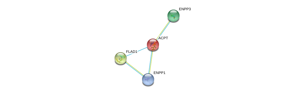 http://string-db.org/version_10/api/image/networkList?limit=0&targetmode=proteins&caller_identity=gene_cards&network_flavor=evidence&identifiers=9606.ENSP00000270593%0d%0a9606.ENSP00000292180%0d%0a9606.ENSP00000350265%0d%0a9606.ENSP00000354238%0d%0a