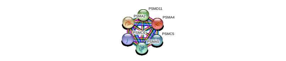 http://string-db.org/version_10/api/image/networkList?limit=0&targetmode=proteins&caller_identity=gene_cards&network_flavor=evidence&identifiers=9606.ENSP00000271308%0d%0a9606.ENSP00000401802%0d%0a9606.ENSP00000223321%0d%0a9606.ENSP00000044462%0d%0a9606.ENSP00000310572%0d%0a9606.ENSP00000261712%0d%0a