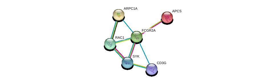 http://string-db.org/version_10/api/image/networkList?limit=0&targetmode=proteins&caller_identity=gene_cards&network_flavor=evidence&identifiers=9606.ENSP00000271450%0d%0a9606.ENSP00000364898%0d%0a9606.ENSP00000255040%0d%0a9606.ENSP00000431445%0d%0a9606.ENSP00000348461%0d%0a9606.ENSP00000262942%0d%0a
