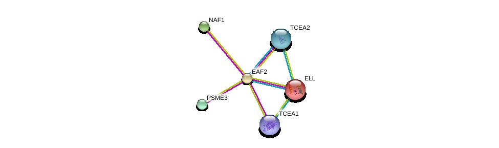 http://string-db.org/version_10/api/image/networkList?limit=0&targetmode=proteins&caller_identity=gene_cards&network_flavor=evidence&identifiers=9606.ENSP00000273668%0d%0a9606.ENSP00000293362%0d%0a9606.ENSP00000428426%0d%0a9606.ENSP00000274054%0d%0a9606.ENSP00000343515%0d%0a9606.ENSP00000262809%0d%0a