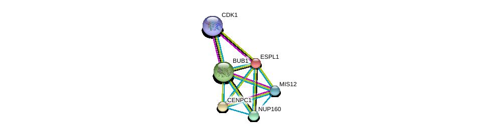 http://string-db.org/version_10/api/image/networkList?limit=0&targetmode=proteins&caller_identity=gene_cards&network_flavor=evidence&identifiers=9606.ENSP00000273853%0d%0a9606.ENSP00000370557%0d%0a9606.ENSP00000367721%0d%0a9606.ENSP00000302530%0d%0a9606.ENSP00000378699%0d%0a9606.ENSP00000257934%0d%0a
