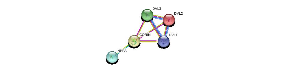 http://string-db.org/version_10/api/image/networkList?limit=0&targetmode=proteins&caller_identity=gene_cards&network_flavor=evidence&identifiers=9606.ENSP00000273857%0d%0a9606.ENSP00000365663%0d%0a9606.ENSP00000005340%0d%0a9606.ENSP00000368169%0d%0a9606.ENSP00000368169%0d%0a9606.ENSP00000316054%0d%0a