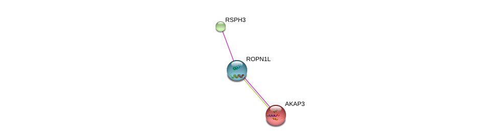 http://string-db.org/version_10/api/image/networkList?limit=0&targetmode=proteins&caller_identity=gene_cards&network_flavor=evidence&identifiers=9606.ENSP00000274134%0d%0a9606.ENSP00000252655%0d%0a9606.ENSP00000228850%0d%0a