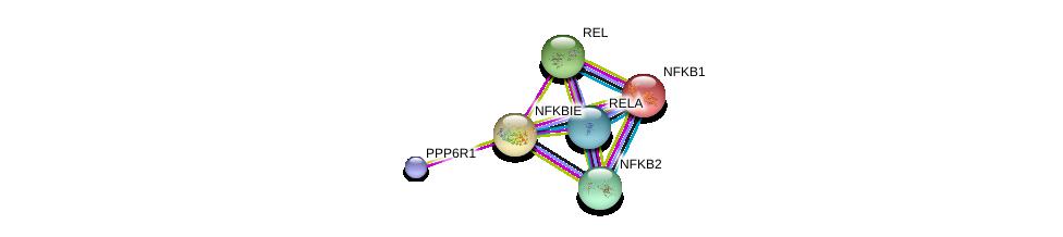 http://string-db.org/version_10/api/image/networkList?limit=0&targetmode=proteins&caller_identity=gene_cards&network_flavor=evidence&identifiers=9606.ENSP00000275015%0d%0a9606.ENSP00000295025%0d%0a9606.ENSP00000384273%0d%0a9606.ENSP00000226574%0d%0a9606.ENSP00000358983%0d%0a9606.ENSP00000414202%0d%0a
