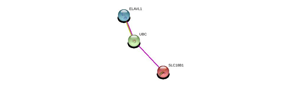 http://string-db.org/version_10/api/image/networkList?limit=0&targetmode=proteins&caller_identity=gene_cards&network_flavor=evidence&identifiers=9606.ENSP00000275227%0d%0a9606.ENSP00000344818%0d%0a9606.ENSP00000385269%0d%0a