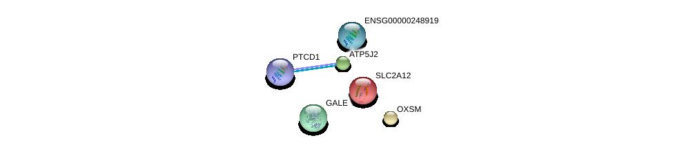 http://string-db.org/version_10/api/image/networkList?limit=0&targetmode=proteins&caller_identity=gene_cards&network_flavor=evidence&identifiers=9606.ENSP00000275230%0d%0a9606.ENSP00000280701%0d%0a9606.ENSP00000363621%0d%0a9606.ENSP00000292475%0d%0a9606.ENSP00000450995%0d%0a9606.ENSP00000400168%0d%0a