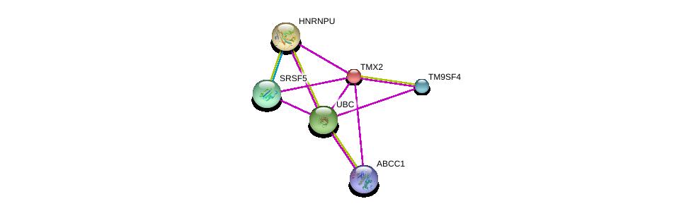 http://string-db.org/version_10/api/image/networkList?limit=0&targetmode=proteins&caller_identity=gene_cards&network_flavor=evidence&identifiers=9606.ENSP00000278422%0d%0a9606.ENSP00000344818%0d%0a9606.ENSP00000381104%0d%0a9606.ENSP00000377892%0d%0a9606.ENSP00000283179%0d%0a9606.ENSP00000382342%0d%0a