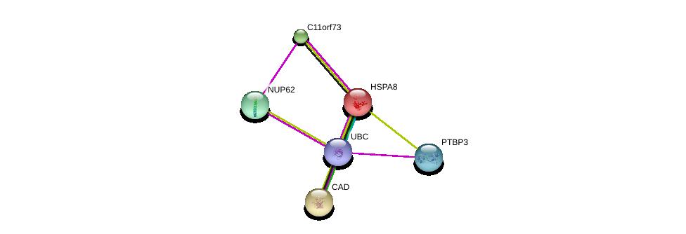 http://string-db.org/version_10/api/image/networkList?limit=0&targetmode=proteins&caller_identity=gene_cards&network_flavor=evidence&identifiers=9606.ENSP00000278483%0d%0a9606.ENSP00000227378%0d%0a9606.ENSP00000305503%0d%0a9606.ENSP00000334499%0d%0a9606.ENSP00000344818%0d%0a9606.ENSP00000264705%0d%0a