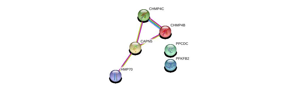 http://string-db.org/version_10/api/image/networkList?limit=0&targetmode=proteins&caller_identity=gene_cards&network_flavor=evidence&identifiers=9606.ENSP00000278559%0d%0a9606.ENSP00000297265%0d%0a9606.ENSP00000217402%0d%0a9606.ENSP00000433967%0d%0a9606.ENSP00000343190%0d%0a9606.ENSP00000356047%0d%0a