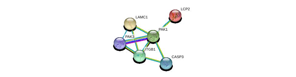 http://string-db.org/version_10/api/image/networkList?limit=0&targetmode=proteins&caller_identity=gene_cards&network_flavor=evidence&identifiers=9606.ENSP00000278568%0d%0a9606.ENSP00000353864%0d%0a9606.ENSP00000046794%0d%0a9606.ENSP00000311032%0d%0a9606.ENSP00000258341%0d%0a9606.ENSP00000303351%0d%0a