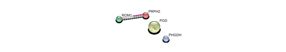 http://string-db.org/version_10/api/image/networkList?limit=0&targetmode=proteins&caller_identity=gene_cards&network_flavor=evidence&identifiers=9606.ENSP00000278833%0d%0a9606.ENSP00000230381%0d%0a9606.ENSP00000270776%0d%0a9606.ENSP00000358417%0d%0a