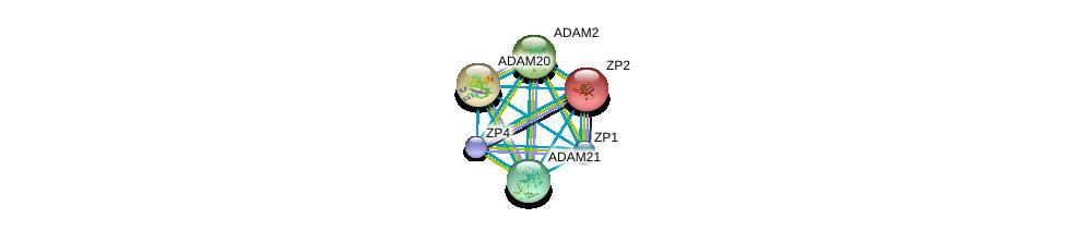 http://string-db.org/version_10/api/image/networkList?limit=0&targetmode=proteins&caller_identity=gene_cards&network_flavor=evidence&identifiers=9606.ENSP00000278853%0d%0a9606.ENSP00000219593%0d%0a9606.ENSP00000256389%0d%0a9606.ENSP00000265708%0d%0a9606.ENSP00000267499%0d%0a9606.ENSP00000355529%0d%0a